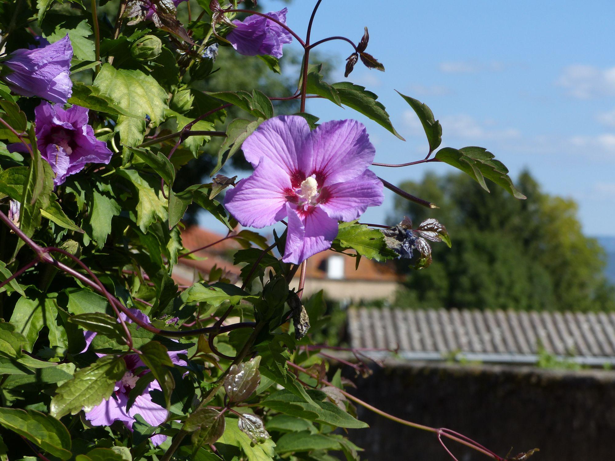 fleursbis